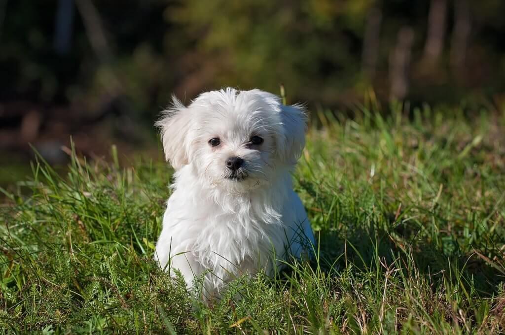 GPS Tracker Vergleich Hunde (2018)